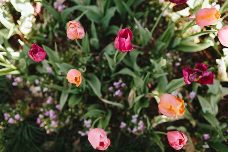 dallas arboretum wedding photographer_017