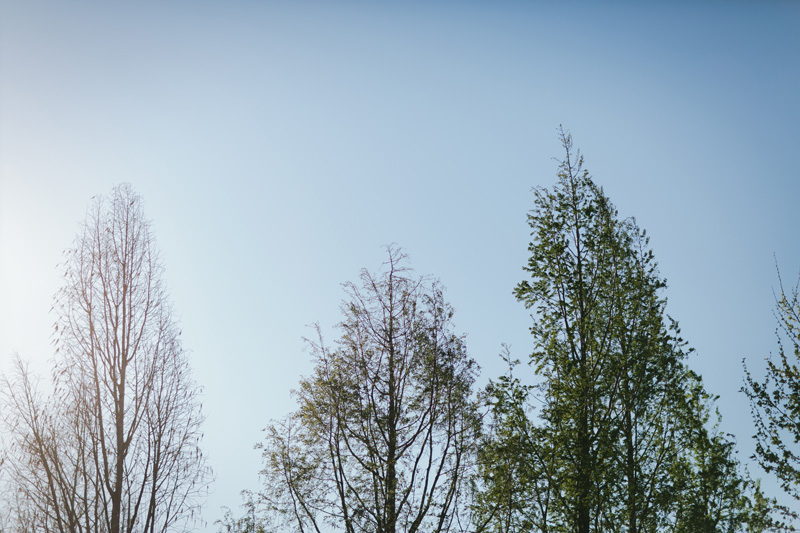 dallas arboretum wedding photographer_045